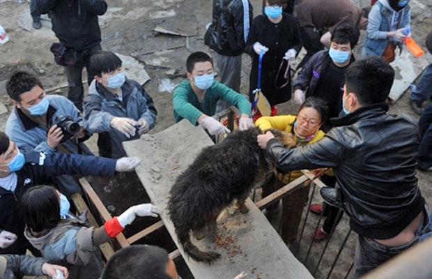 Os 500 cachorros seriam abatidos e vendidos como carne (Foto: AFP)
