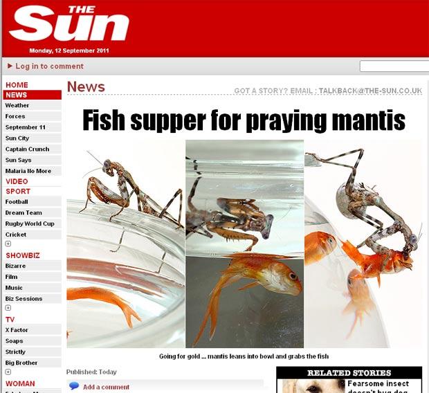 Louva-deus foi flagrado devorando peixe. (Foto: Reprodução/The Sun)