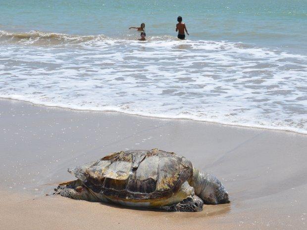 Tartaruga aparece morta no Litoral da Paraíba (Foto: Walter Paparazzo/G1 PB)
