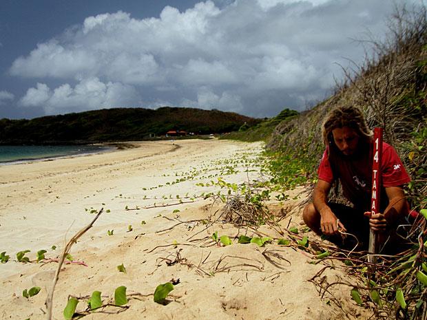 Pesquisador do Projeto Tamar coloca estaca de demarcação em ninho de tartaruga, na Baía do Sueste (Foto: Divulgação / Projeto Tamar)