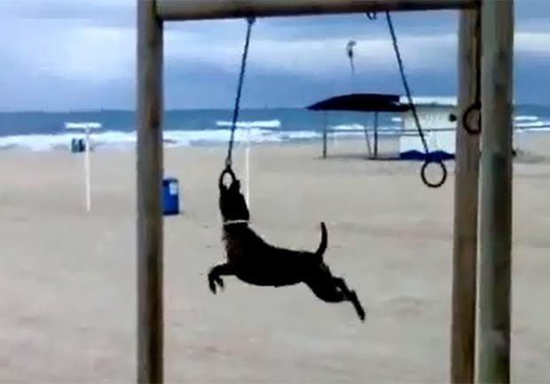 Cão mostrou talento ao fazer movimentos acrobáticos em uma argola de ginástica. (Foto: Reprodução/YouTube)