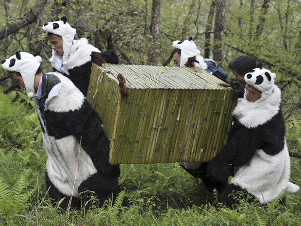 Pesquisadores carregam caixote com o urso panda Tao Tao, de 21 meses, que participa de processo de reintrodução da espécie na natureza.  (Foto: Reuters/China Daily)