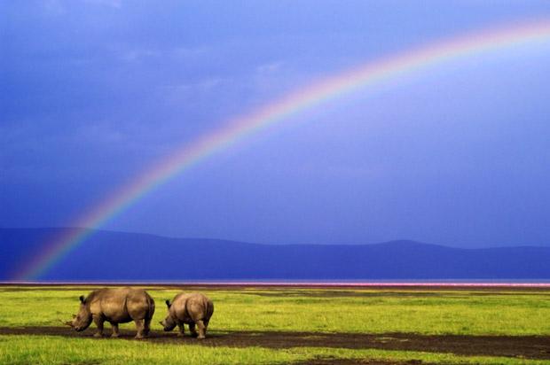 Wild Africa (Foto: Foto: Alex Bernasconi)