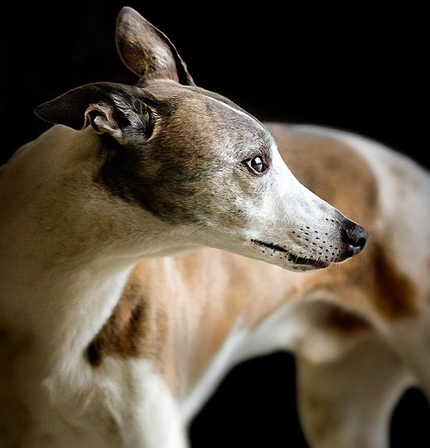 Imagem de cachorro fotografado com alto ISO e curta profundidade de campo (Foto: Andreas Krappweis)