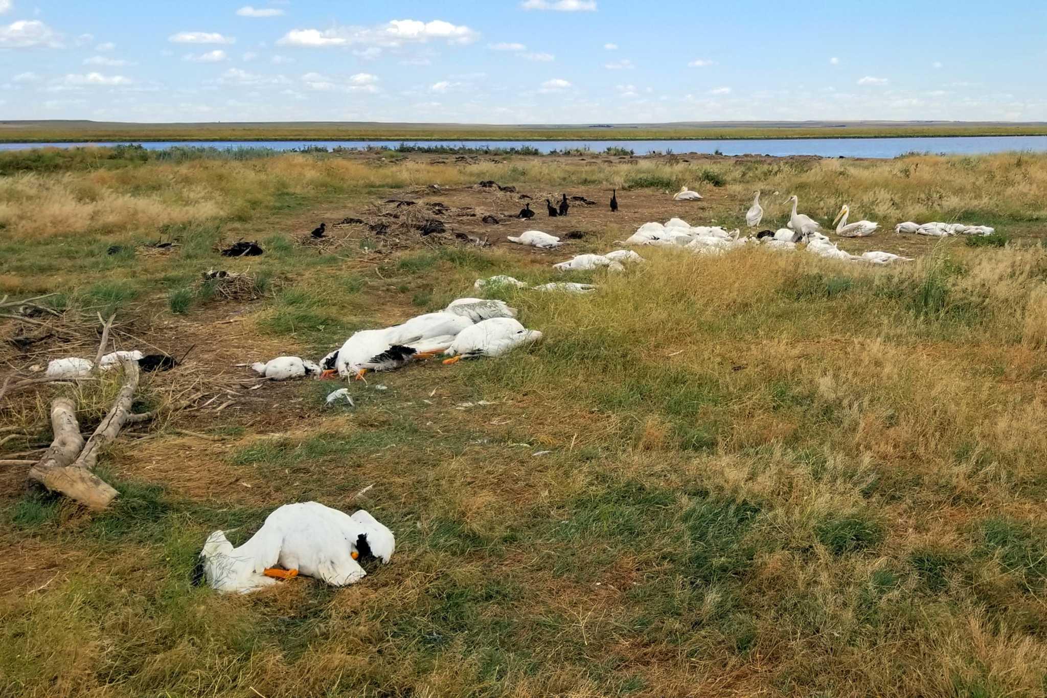 Montana Hailstorm Slaughters 11 000 Birds
