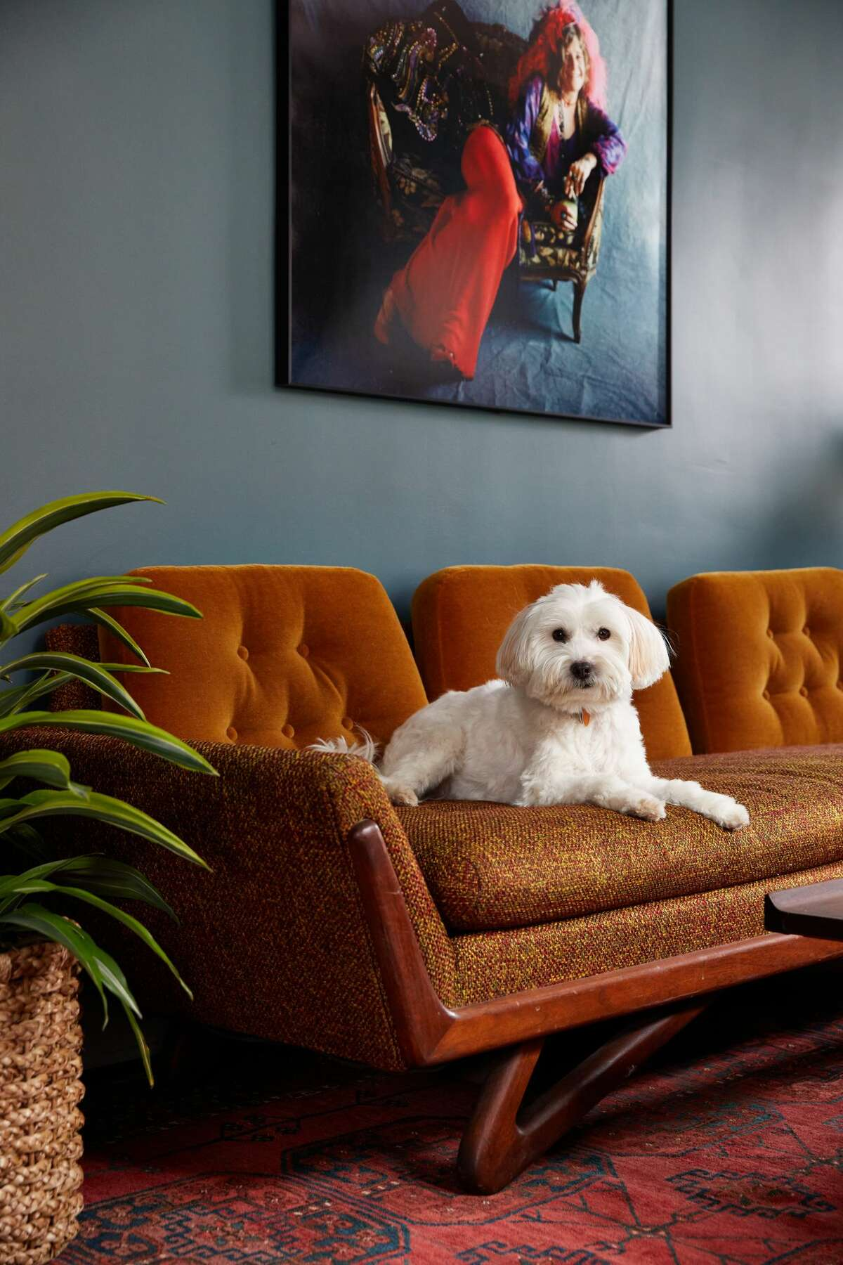 The Hotel Kinsley in Kingston is near several dog-friendly parks and trails.