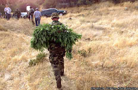 Agents Destroy Another Pot Farm / 3,600 plants found in ...
