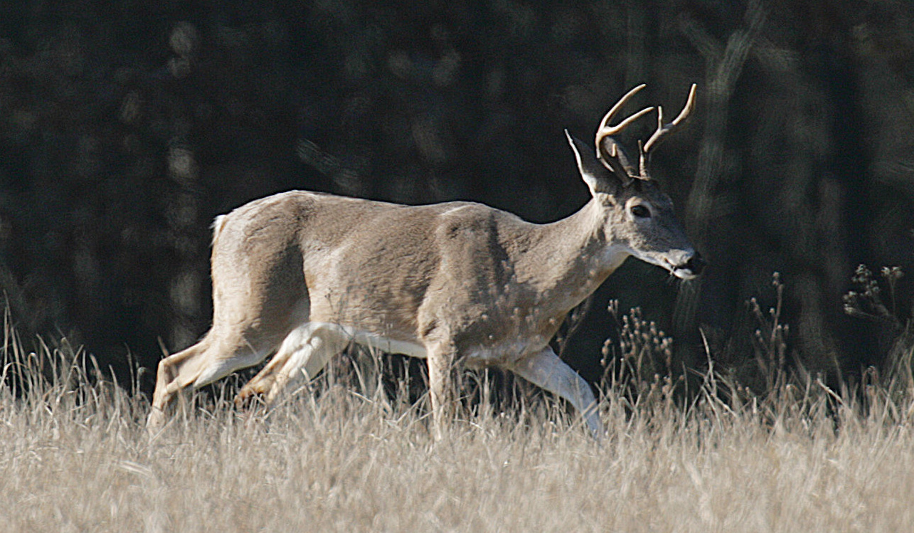 Sleep Time For Deer Depends On What S Normal San