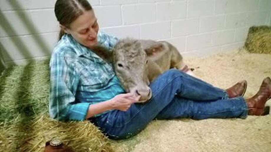 Hero The Calf Headed Home With New Prosthetic Hooves