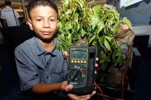 Hasil gambar untuk Penghasil listrik dengan pohon kedondong
