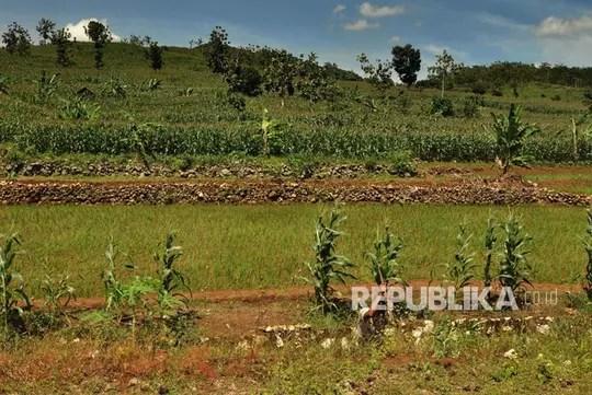 Kereeenn..Pertanian di Sekitar Pabrik Semen Rembang Kian Menggeliat