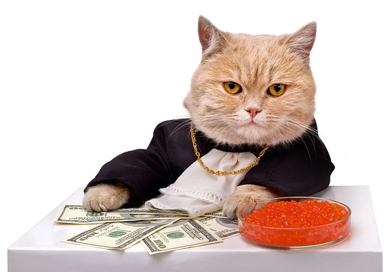 A stock-picking cat? Don't LOL - MarketWatch