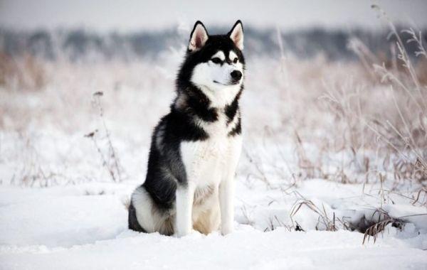 Красивые породы собак: фото, внешний вид, описание и ...