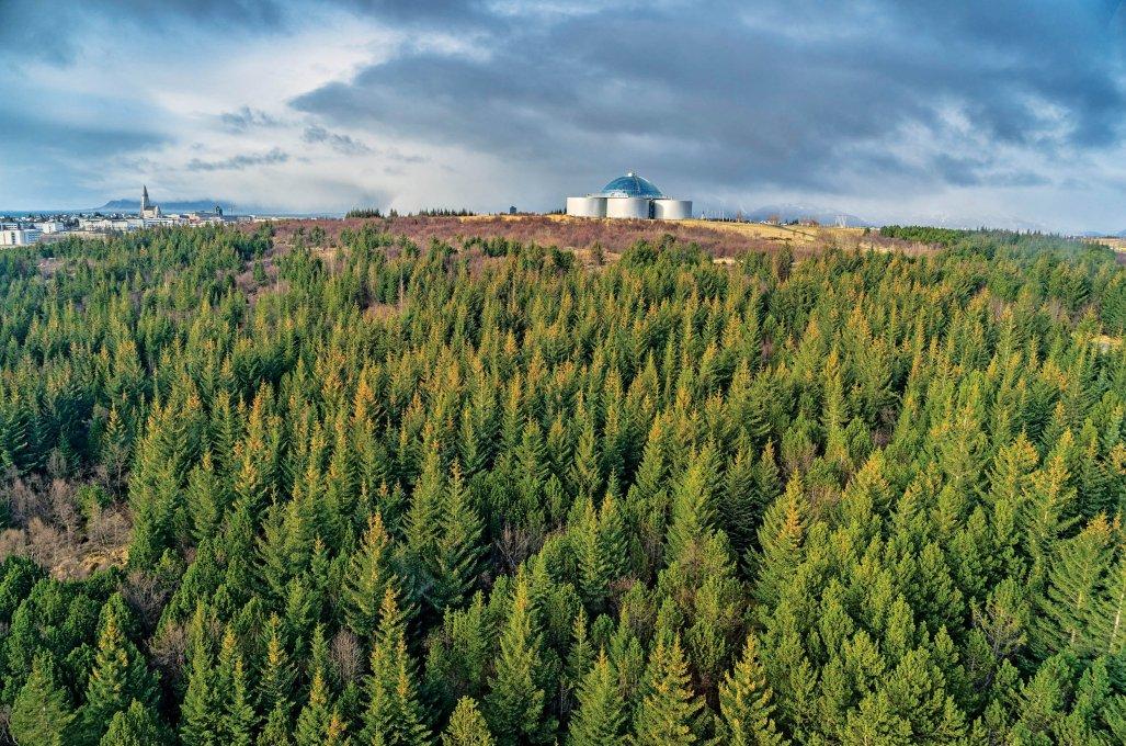 Curiosità sull'Islanda e sugli islandesi - Ci sono alberi in Islanda?