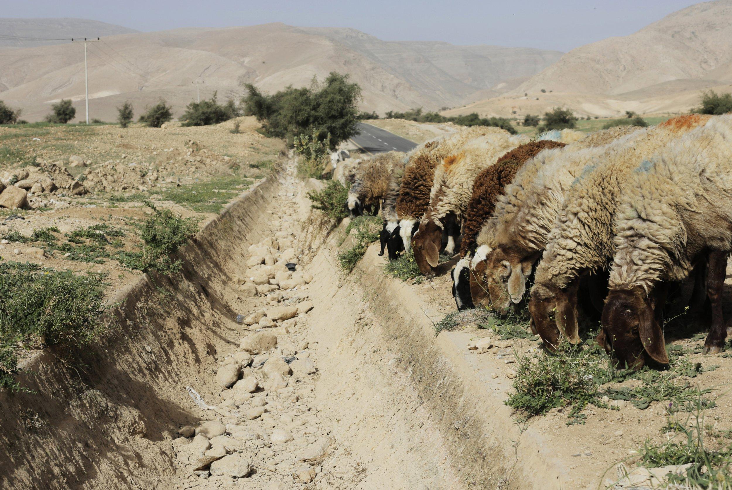 Αποτέλεσμα εικόνας για Documents Reveal Middle East Regimes Fear Food, Water, Energy Shortages