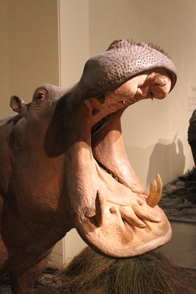 Музей естественной истории в Берлине