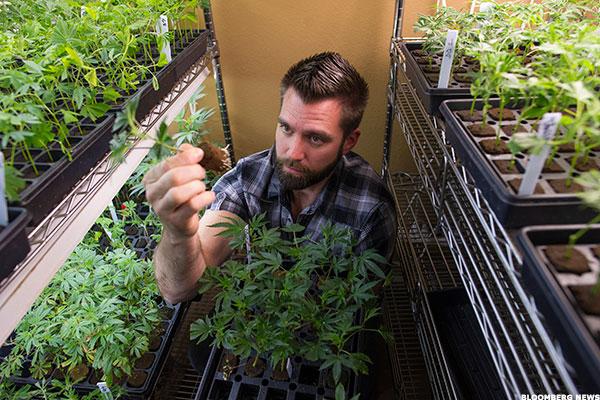 Marijuana has become big business.