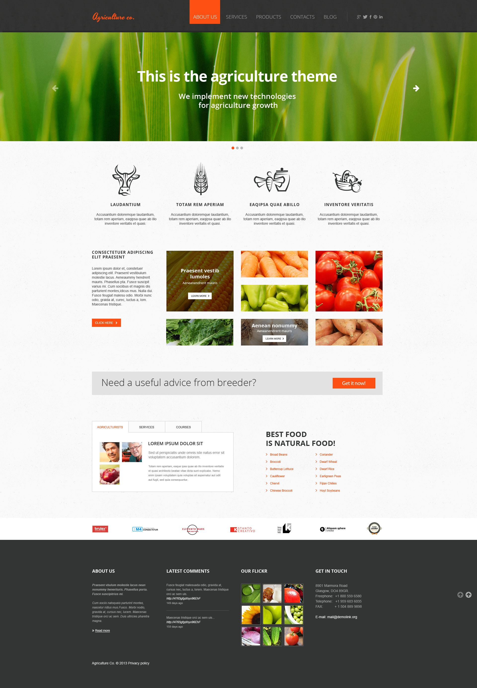 Vegetable Responsive Website Template 47427