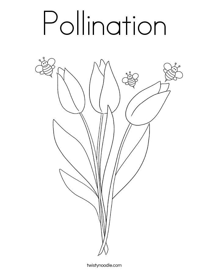 Pollination Coloring Page Twisty Noodle