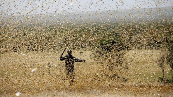 Locust Attack: Several Districts in Uttar Pradesh Put on Alert; Drones to  Help Control Swarms | The Weather Channel - Articles from The Weather  Channel | weather.com