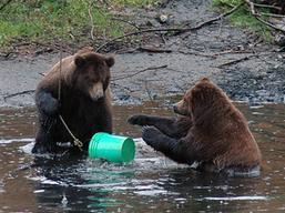 BearsSalmon_art_257_20081117103802.jpg