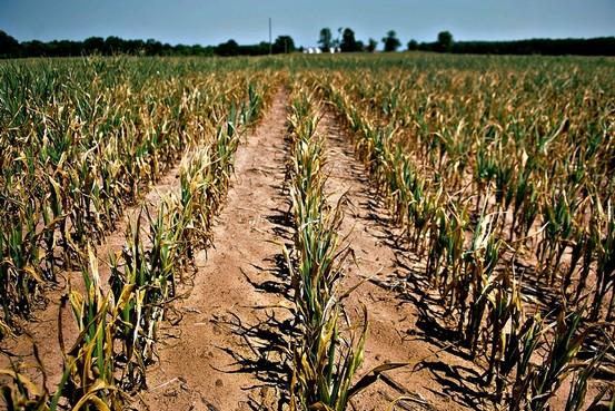 Usda Surprisingly Aggressive On Corn Crop Reduction