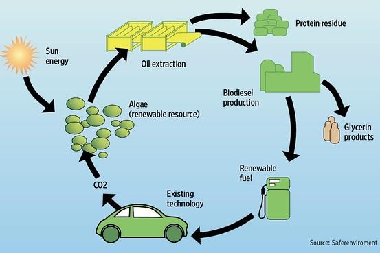 [ey_biofuel]