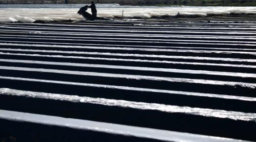 As virus leaves borders shut, European farmers sound alarm