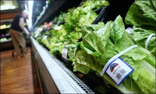 Erster Todesfall durch bakterienverseuchten Salat in den ...