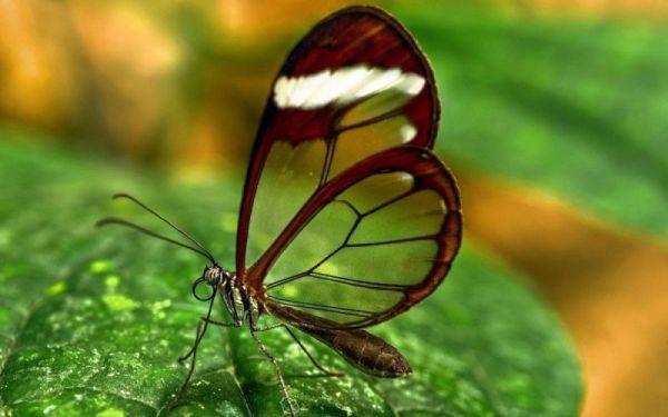 Красивые фотографии бабочек - Zefirka