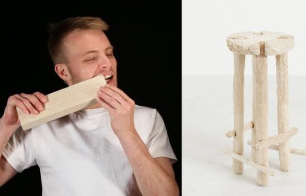 Человек-бобер сделал табуретку, используя зубы вместо ...