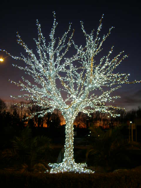 Man Made Tree Of Lights Entrance To 169 Brian Green Cc