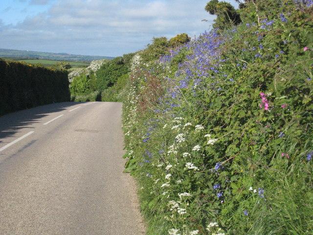 Hedgerow flowers alongside the B3283