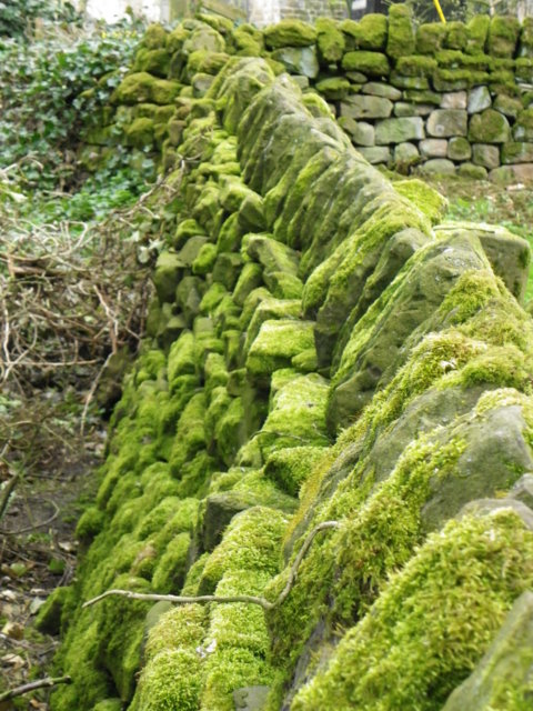 Moss on the wall, Kildale