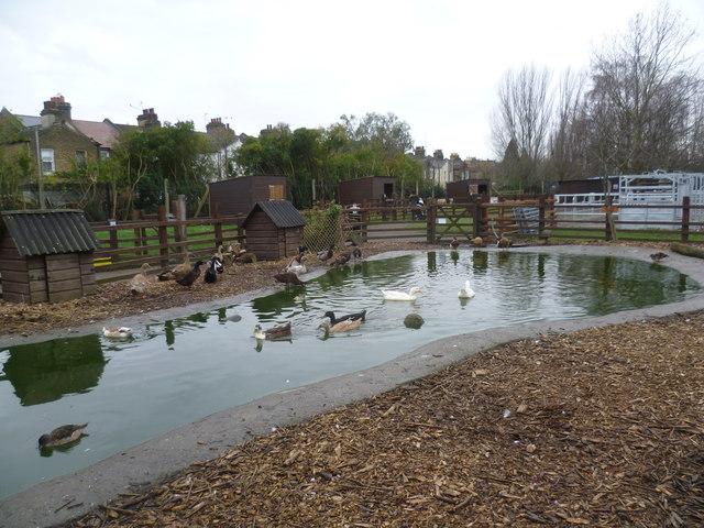 Farm Pond Management Uk
