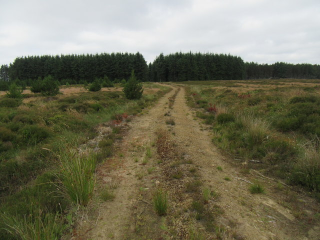Allerston High Moor © T W Eyre :: Geograph Britain and Ireland