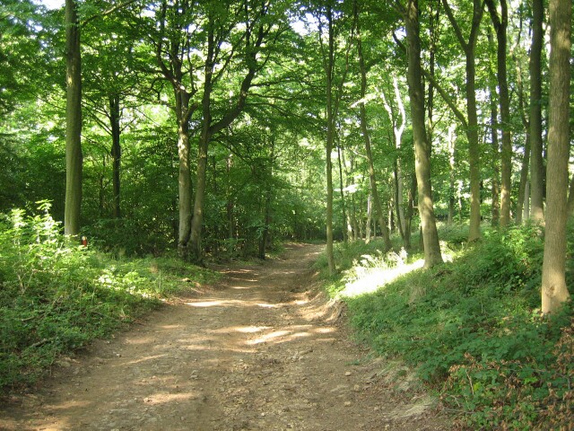 Image result for images of woodland path