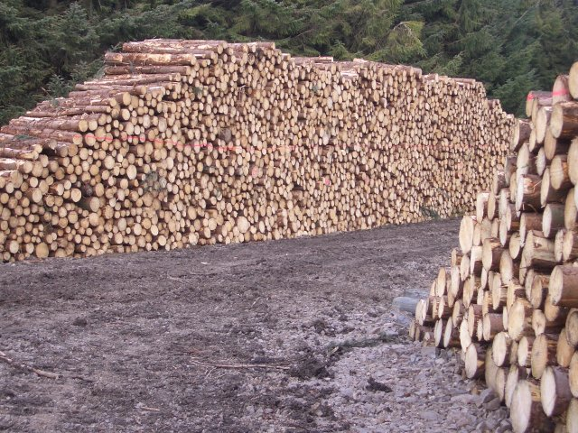 Log Pile 169 Callum Black Cc By Sa 2 0 Geograph Britain