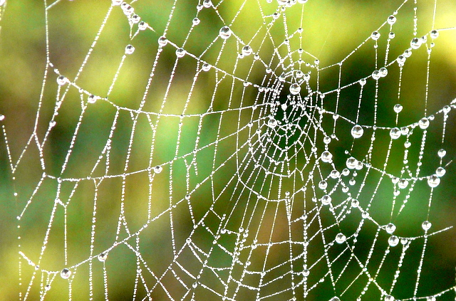 Close Up Of Spiders Web Sylvia Duckworth Geograph Britain And Ireland