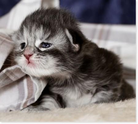 Подборка смешных котиков Прикольные картинки на fun.tochka ...