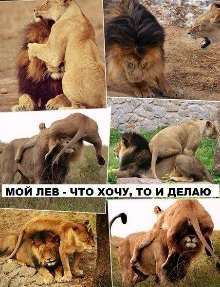 животные картинки Приколы, анекдоты, картинки ...