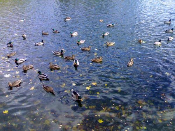 Правильная охота на уток (3 фото) - ЯПлакалъ