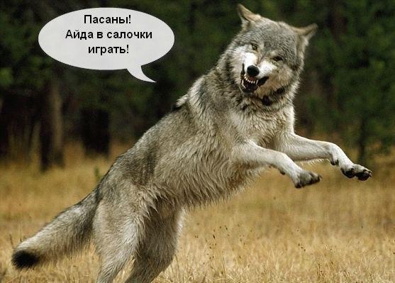 Картинки волки приколы / picpool.ru
