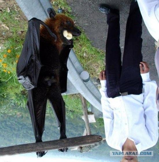 Летучая собака. 5 фото - ЯПлакалъ