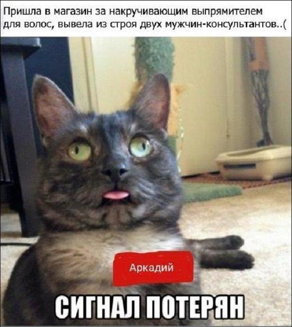 Смешные картинки с подписями - ЯПлакалъ