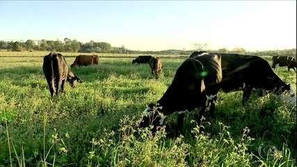 Globo Rural: leite orgânico avança entre produtores paulistas