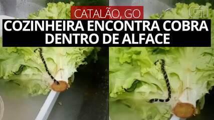 VIDEO: Cook finds snake inside lettuce in Catalan