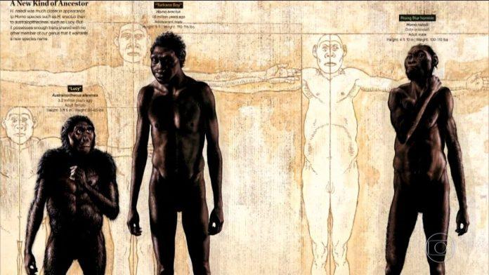 Ancestral humano viveu na mesma época em que homem moderno surgiu, diz pesquisa
