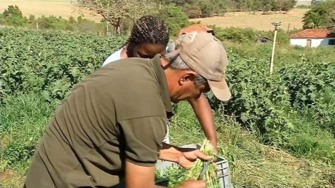 Voluntários criam horta para doar alimentos para Santa Casa de Votuporanga