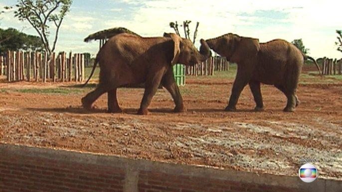 Elefante Babu morre e intriga veterinários do zoológico